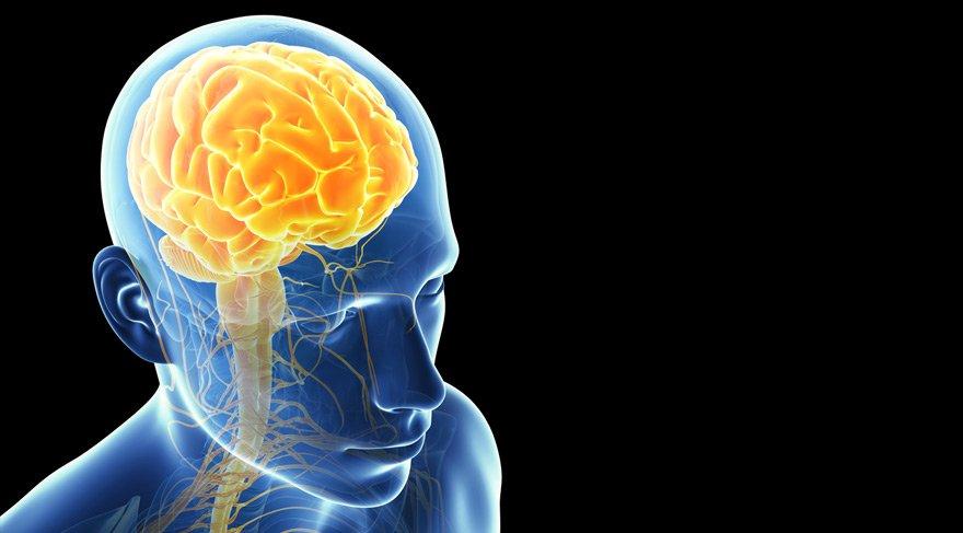Beynin parçaları nelerdir