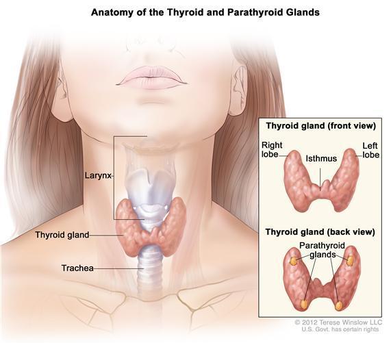Hipertiroidi